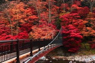 紅のつり橋/那須塩原の紅葉名所の写真素材 [FYI03132606]