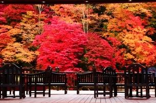 紅のつり橋/那須塩原の紅葉名所の写真素材 [FYI03132611]