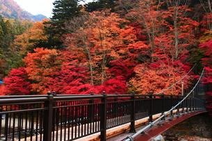 紅のつり橋/那須塩原の紅葉名所の写真素材 [FYI03132614]