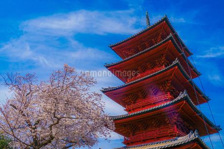 満開の桜と五重塔の写真素材 [FYI03132652]