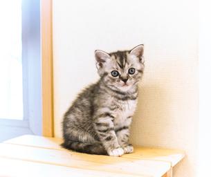 かわいい仔猫の写真素材 [FYI03132733]