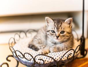 仔猫の写真素材 [FYI03132734]