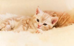 仔猫のお昼寝の写真素材 [FYI03132743]