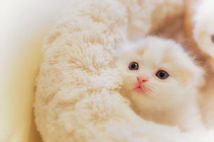 かわいい仔猫の写真素材 [FYI03132747]