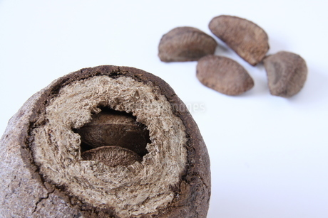 ブラジルナッツの果実と種の写真素材 [FYI03132795]