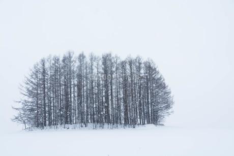雪の丘のカラマツ林 美瑛町の写真素材 [FYI03132862]