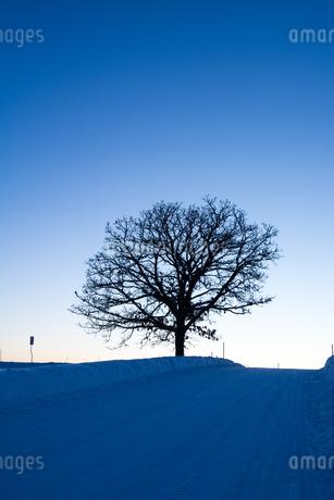 夕暮れの冬の丘 美瑛町の写真素材 [FYI03132872]