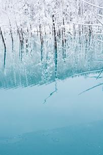 冬の青い池 美瑛町の写真素材 [FYI03132885]