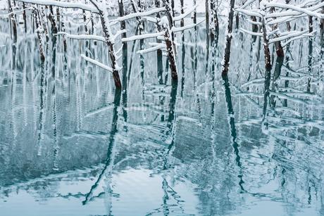 冬の青い池 美瑛町の写真素材 [FYI03132886]