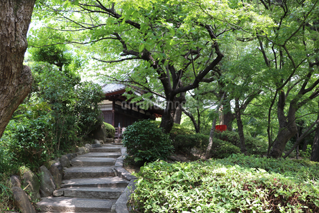 緑豊かな夏の日本庭園の写真素材 [FYI03132890]