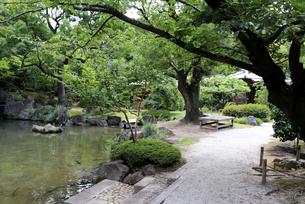 夏の公園散策の写真素材 [FYI03132896]