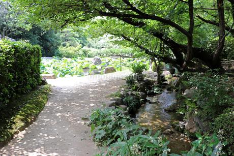 夏の公園の写真素材 [FYI03132898]