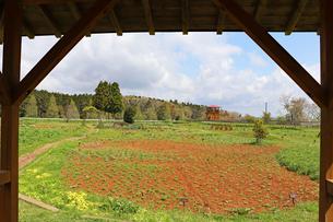 農園風景の写真素材 [FYI03132947]