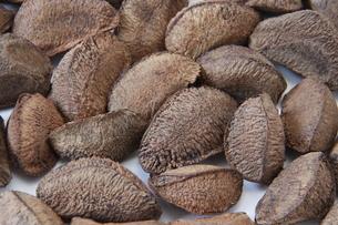 ブラジルナッツの種子の写真素材 [FYI03132963]