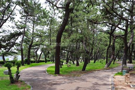 松林の遊歩道の写真素材 [FYI03132977]