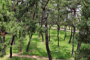 神戸・舞子公園の松林の写真素材 [FYI03132979]