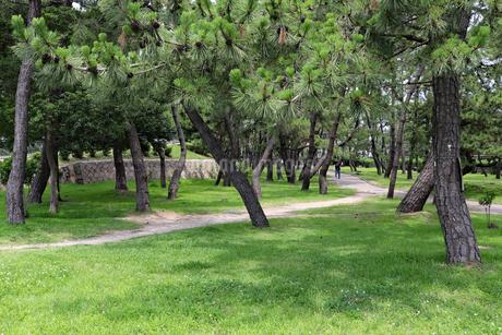 神戸・舞子公園の松林の写真素材 [FYI03132980]