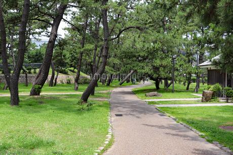 芝生広がる緑の松林の写真素材 [FYI03132981]