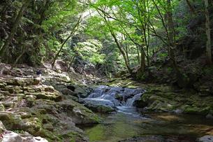 春の渓谷の写真素材 [FYI03133047]
