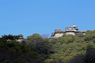 堀之内からの松山城の写真素材 [FYI03133373]
