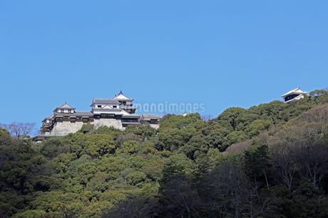 堀之内からの松山城の写真素材 [FYI03133374]