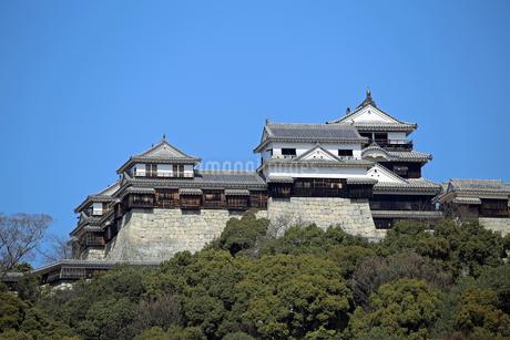 堀之内からの松山城の写真素材 [FYI03133381]