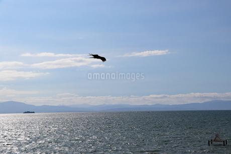 水辺を舞うトンビの写真素材 [FYI03133387]