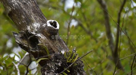 ハートのある木の写真素材 [FYI03133455]