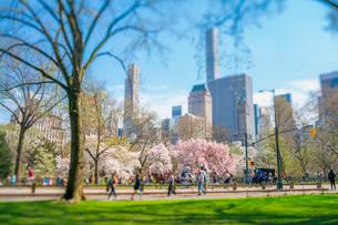 ミッドタウンマンハッタンの摩天楼の下に咲くセントラルパークの満開の桜の木々と公園の道を行き交う人々と馬車と自転車。の写真素材 [FYI03133596]