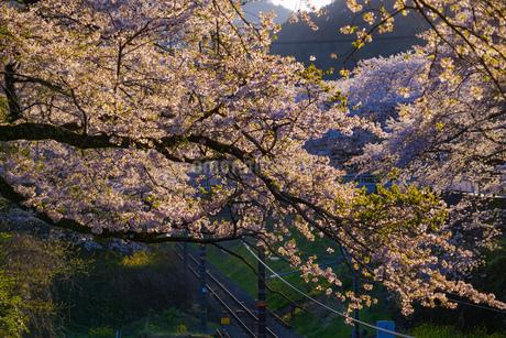 春の山北駅(神奈川県足柄上郡)の写真素材 [FYI03133642]