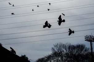 鳩の大群の写真素材 [FYI03133654]