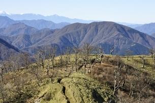 大室山と棚沢ノ頭の写真素材 [FYI03133969]