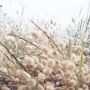 秋の野原の写真素材 [FYI03134155]