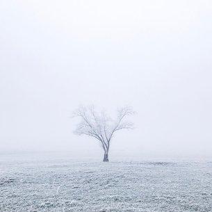 冬の野原の写真素材 [FYI03134160]