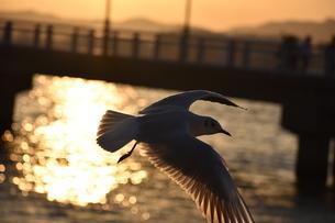 夕日と鴎の写真素材 [FYI03134460]