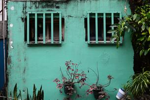 格子窓があるエメラルドグリーンの古い壁と観葉植物の写真素材 [FYI03134605]