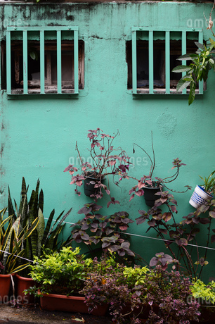 格子窓があるエメラルドグリーンの古い壁と観葉植物の写真素材 [FYI03134606]