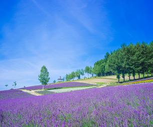 北海道 自然 風景  満開の花畑と青空の写真素材 [FYI03134622]