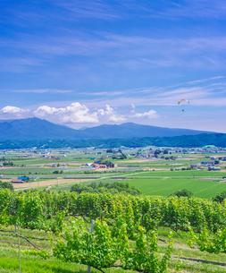北海道 自然 風景   青空と新緑のぶどう畑の写真素材 [FYI03134633]