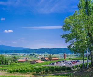 北海道 自然 風景   青空と新緑のぶどう畑の写真素材 [FYI03134654]