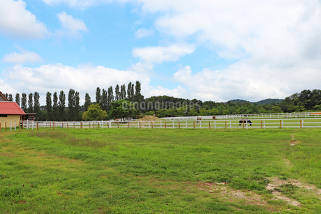 のどかな牧場の風景の写真素材 [FYI03134913]