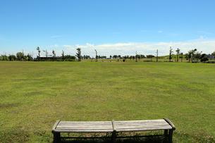 公園の芝生広場の写真素材 [FYI03134916]