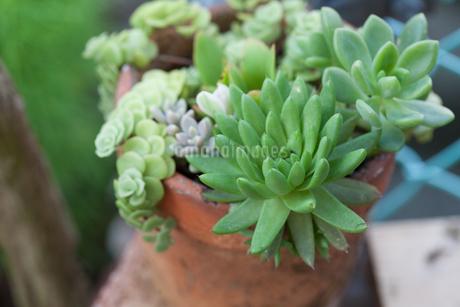 多肉植物の写真素材 [FYI03134929]