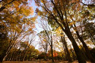 代々木公園の秋の写真素材 [FYI03135063]