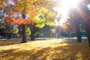 紅葉の代々木公園の写真素材 [FYI03135068]