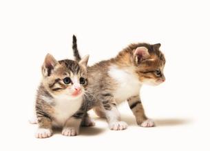 2匹の兄弟猫の写真素材 [FYI03135104]