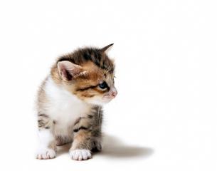 子猫のしぐさの写真素材 [FYI03135105]