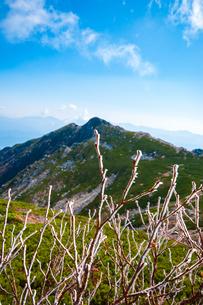 乗越浄土より氷るダケカンバの枝と中央アルプス南アルプスの山並みの写真素材 [FYI03135142]