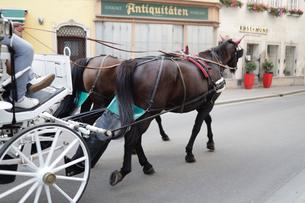ウイーン市内を走る馬車の写真素材 [FYI03135243]