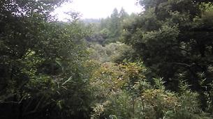 生田緑地(神奈川県川崎市)の写真素材 [FYI03135264]